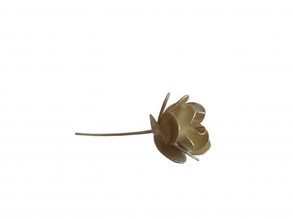 Rose (Auslauf)